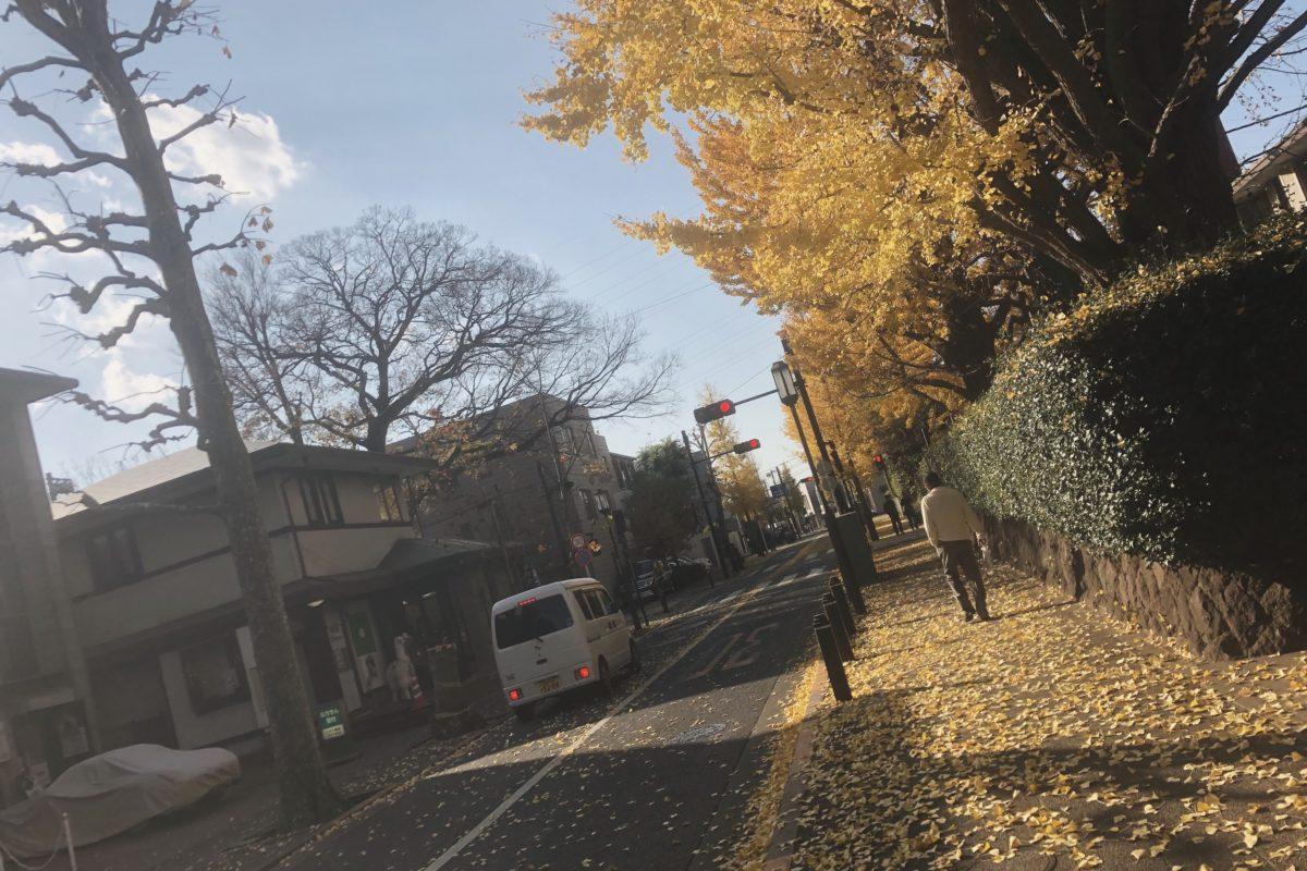 成城学園前の銀杏