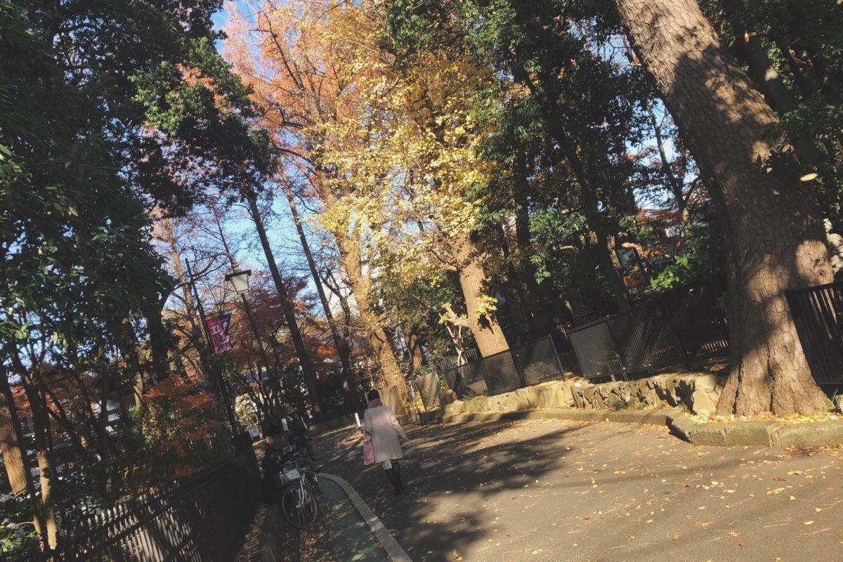 狛江の紅葉